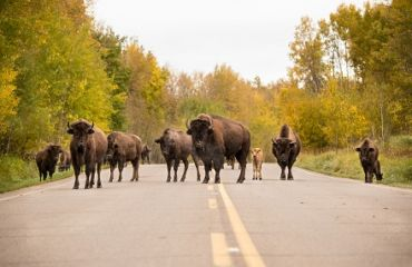 Elk Island Nationalpark | Foto: Travel Alberta